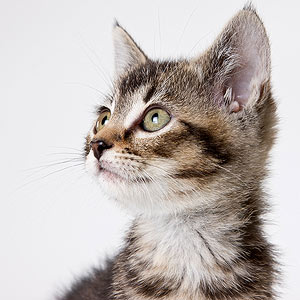 Caring for Your Cat: The Top Ten Essentials