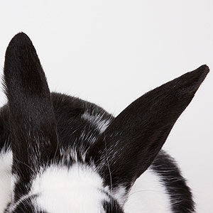 Rabbit, Horse, and Other Pet Care