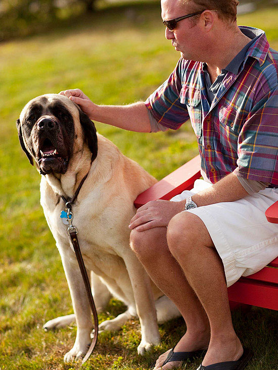 Fun Facts About Big Dog Breeds