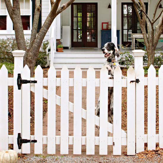 fencing keep your dog safe. Black Bedroom Furniture Sets. Home Design Ideas