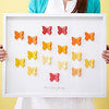 Framed Butterfly Family Tree