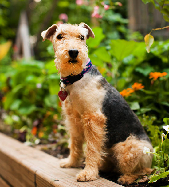 Traditional Irish Names For Dogs