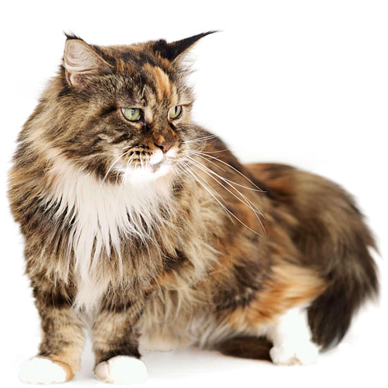 10 All-American Cats
