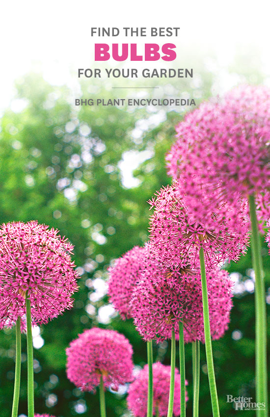 Bulbs – Better Homes and Gardens Plant Encyclopedia