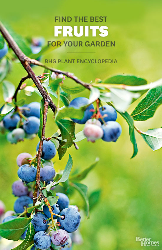 Fruits – Better Homes and Gardens Plant Encyclopedia