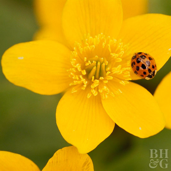 Beneficial Insects for Your Garden