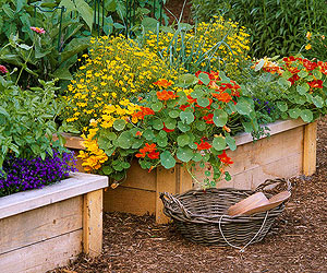 10 Tips for Sustainable Gardening