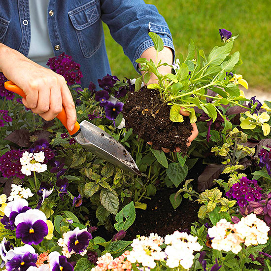 Basic Planting Guide: What You Need to Know to Start Your First Garden