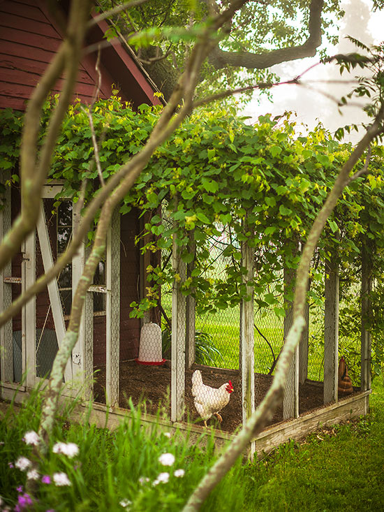 Chicken Coop Ideas to Try