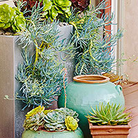 Gorgeous Container Garden Ideas