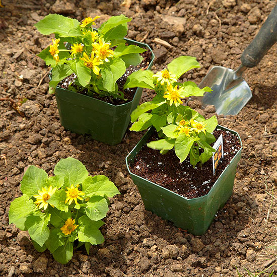 Planting Tips for New Gardeners