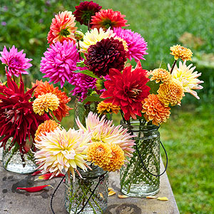 Dahlia Flowers: How to Grow, Cut, and Arrange Them