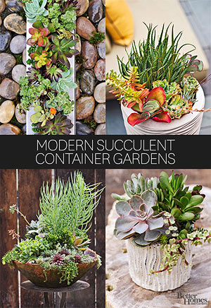 10 fresh ways to add succulents to your home