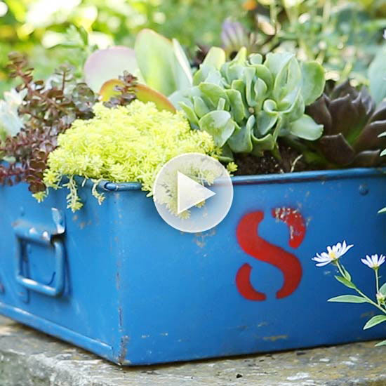 Easy Care Succulent Containers