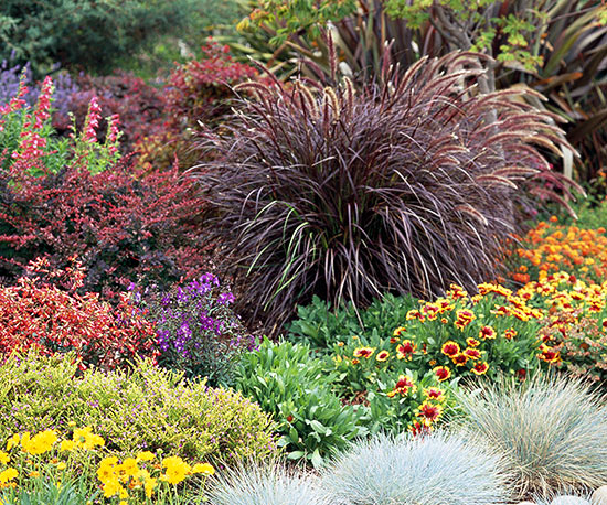 Top ornamental grasses landscaping in claremont for Tall purple ornamental grass