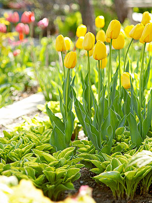 Designing with Spring Bulbs