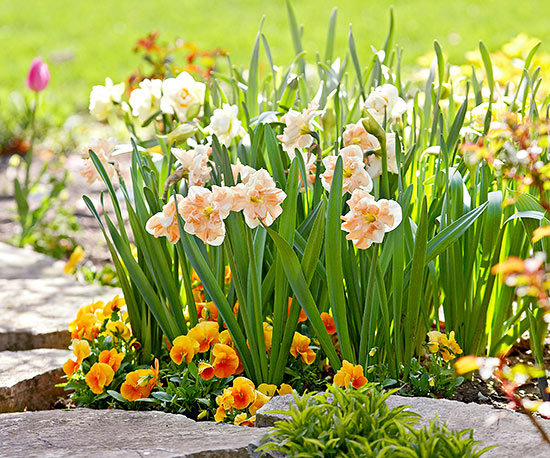 How to Care for Spring Bulbs
