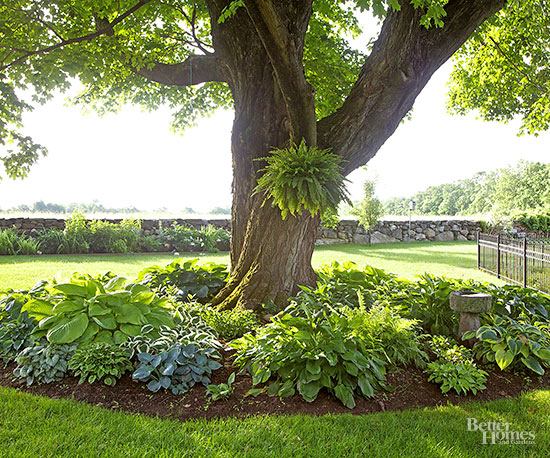 A Gardener's Guide to Hostas