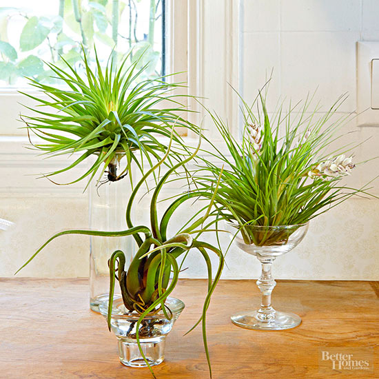 Air plant display ideas for Air plant holder ideas