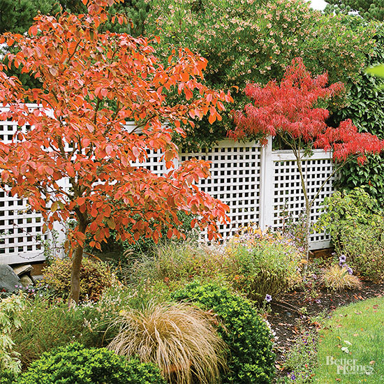 Better Homes And Gardens Sweepstakes >> When Should I Prune Redtwig Dogwods: Before or After They ...