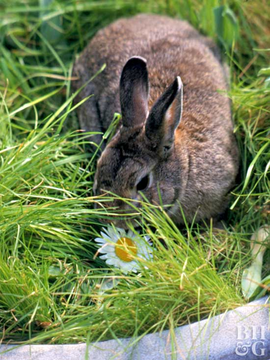 How To Keep Rabbits From Eating Flowers And Plants Flower Inspiration