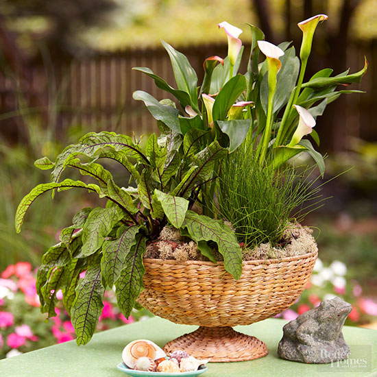 itu0027s generous to share garden plants with friends though i donu0027t think the seedpods will do you much good like most bulbs calla lilies are best
