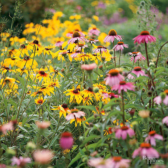 When Can I Safely Plant My Annual Flowers in the Garden?