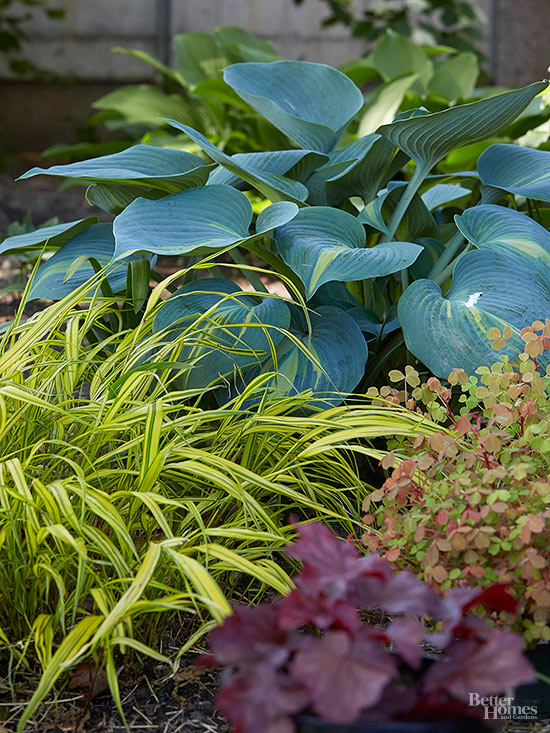 Insects Eating Hostas