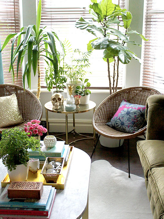 5 Rooms Made Better By Adorable Houseplants
