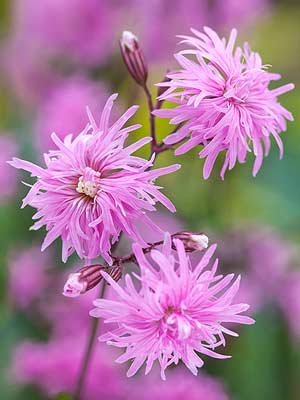 Top New Perennials for 2016