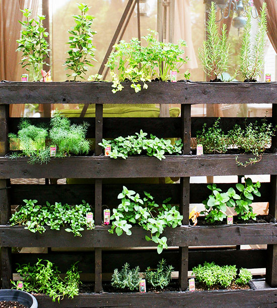 1000 images about container indoor gardens on pinterest for How to make a vertical garden using pallets