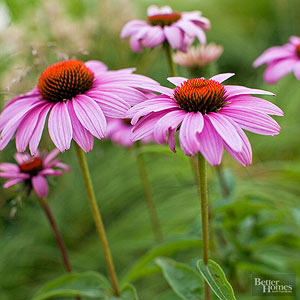 Easy-to-Grow Perennials