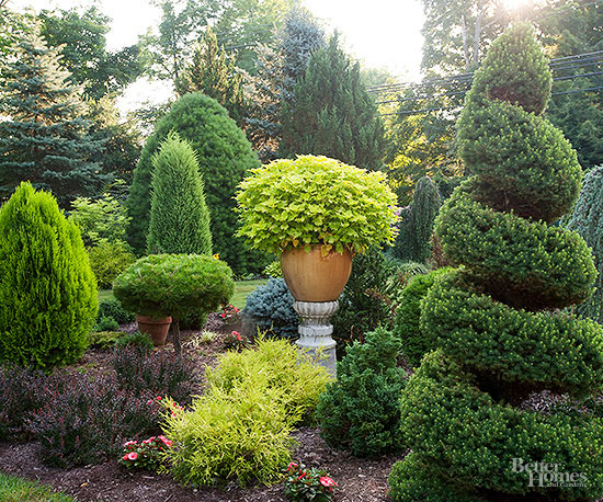 Evergreen trees for Small garden trees evergreen