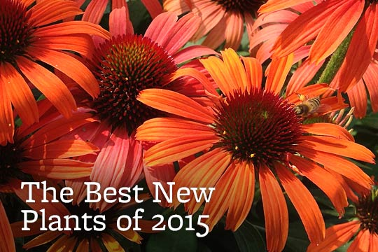 The Best New Plants of 2015