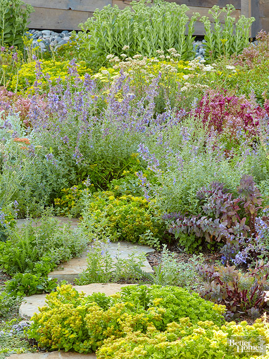 Walkable groundcovers for Perennial ground cover plants for sun