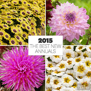New Annuals for 2015