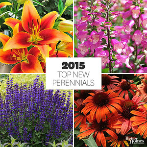 New Perennials for 2015