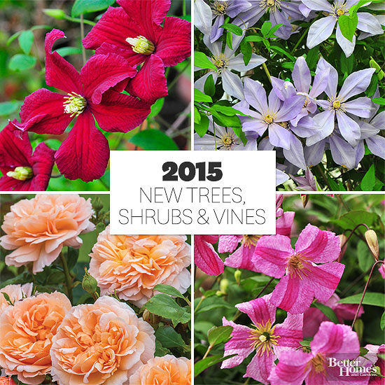 Stunning New Trees, Shrubs and Vines for 2015