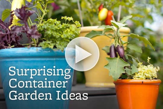 Surprising Container Garden Ideas
