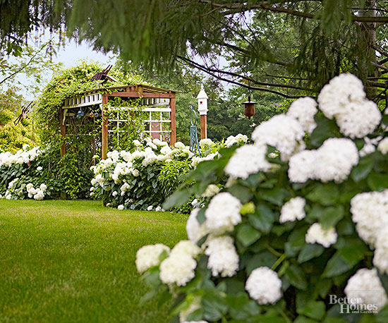 Heavenly White Hydrangeas