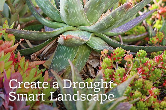 Create a Drought-Smart Landscape