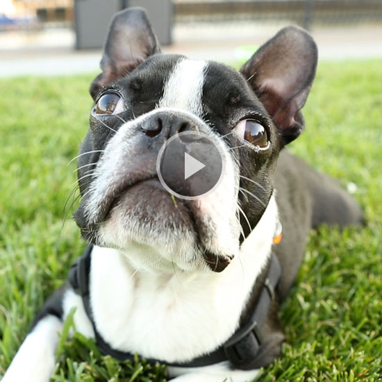 Why Do Dogs Have Wet Noses and Whiskers?