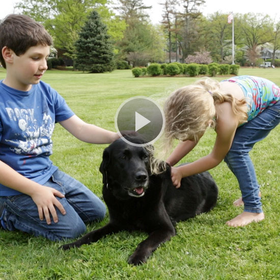 Avoid These 3 Mistakes When Introducing Dogs