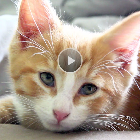 How Long To Cats Live On Average