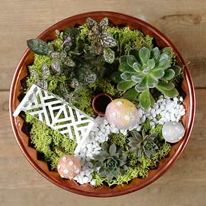 Terrarium Projects