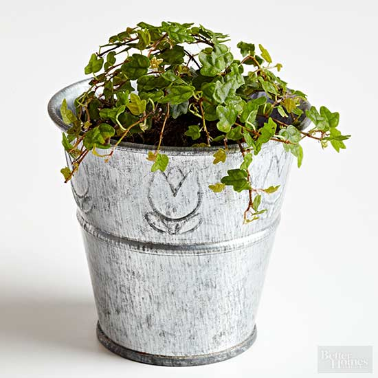 Its preference for low light and high humidity make this pretty little vine a good choice for terrariums or moist dish gardens.  sc 1 st  Better Homes and Gardens & Top Plants for Fairy Gardens azcodes.com