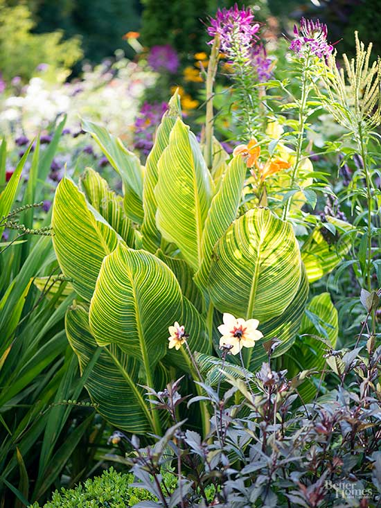 7 Secrets to Overwintering Tropical Plants