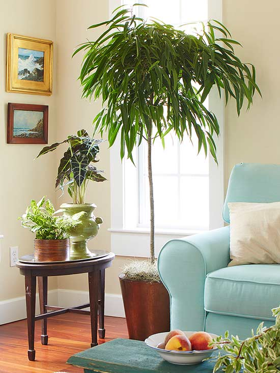 Indoor trees that spruce up any space for Living room with indoor plants