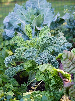 How to Grow Kale for Smoothies, Salads, Chips, and More