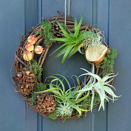 how to take care of air plants in singapore